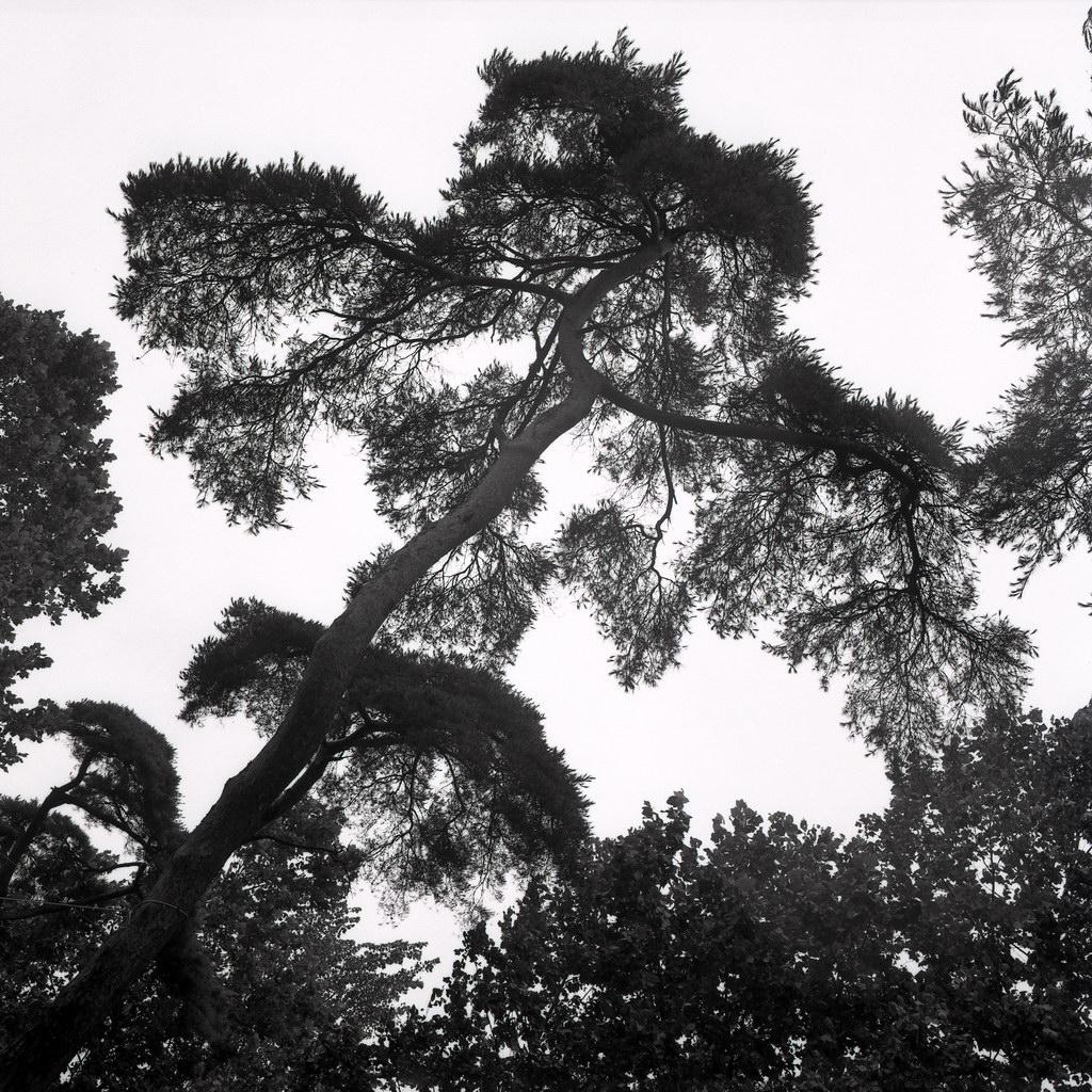 bäume am kum-gang, kongju, südkorea 1991
