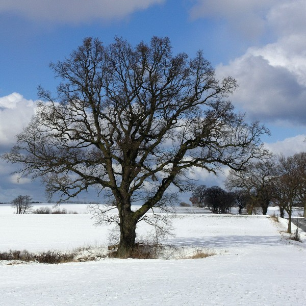 winterlandschaft bei giekau, kreis plön