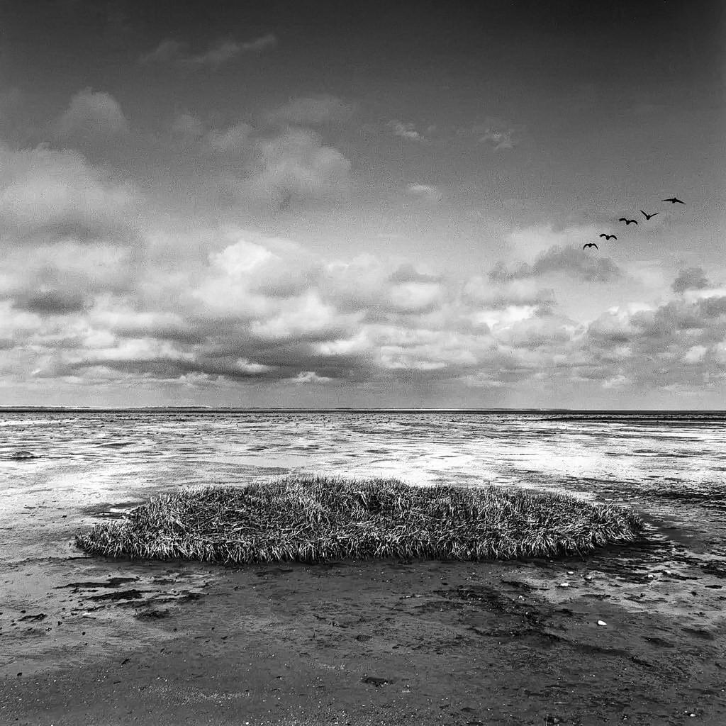 am meer, amrum, watt, ebbe,  2003, schwarz-weiß